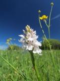 orchideen-10