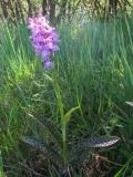 orchideen-11