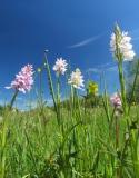 orchideen-12