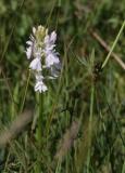 orchideen-16