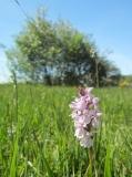 orchideen-3