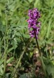 orchideen-4