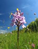 orchideen-5