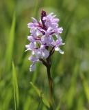 orchideen-6