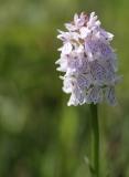 orchideen-7